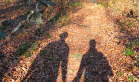 Forest Walking Shadows